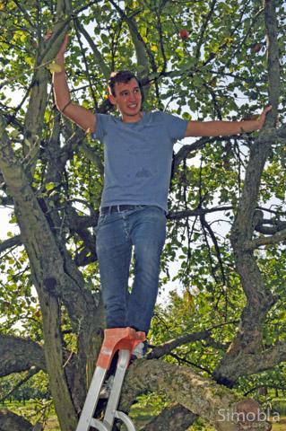 Mann im Baum: Johannes Sittig rüttelt kräftig an den Ästen
