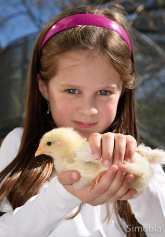Luise (6 Jahre) hat keine Scheu, das lebhafte kleine Huhn zu halten.