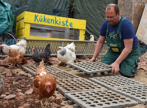 Die Hühner lassen sich von Matthias Günther nicht stören, der den neuen Standplatz des Misthängers mit Lochplatten befestigt.