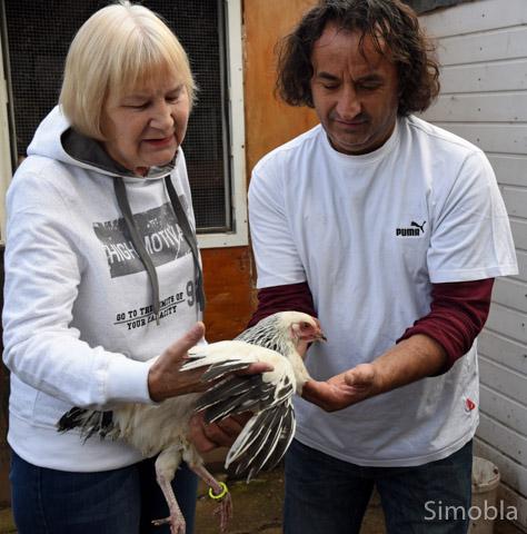 Maria Kaulbert und Nano Latovic mit einem kleinen Susek-Huhn.